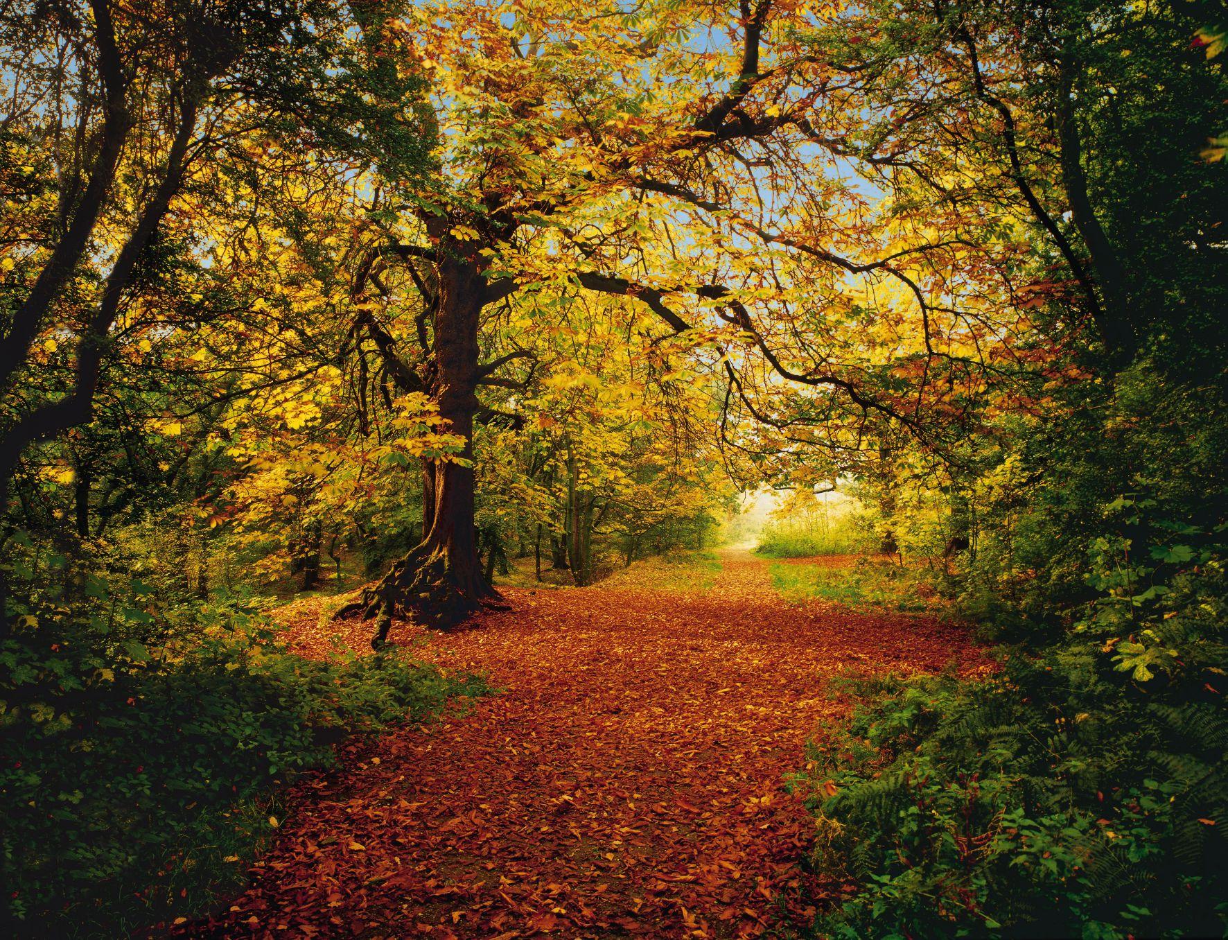 Im Herbstwald die Seele baumeln lassen.